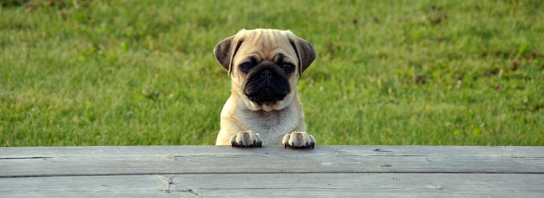 Bicom - Zeptejte se psa